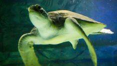 Plastiksiz denizler için yeni stratejiler araştırılıyor